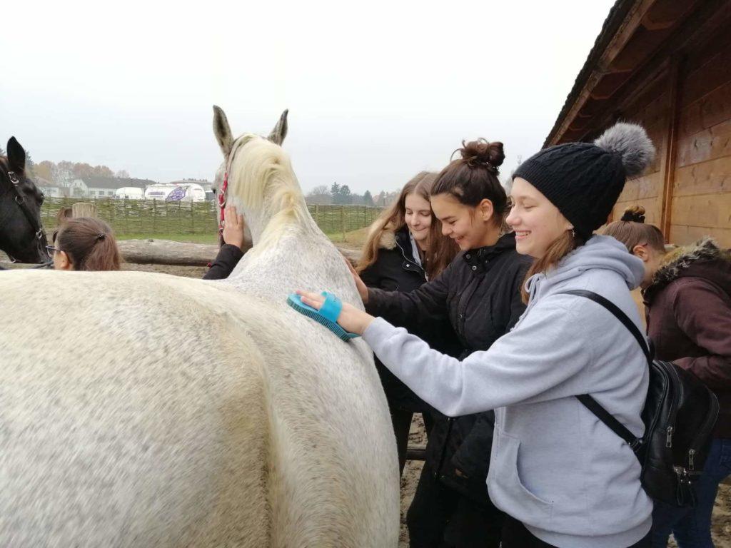 ODOBREN PROJEKT U Đurđevac stiže terapijski konj