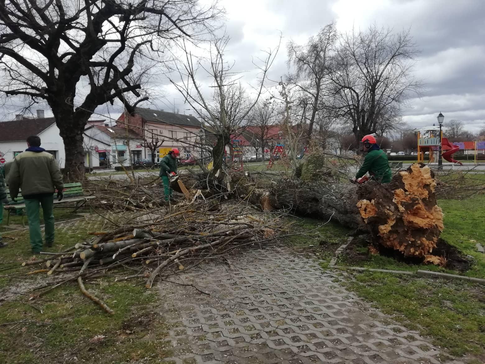 PROBLEMI ZBOG VJETRA Na Trgu hrvatskih branitelja iščupano stablo s korijenom