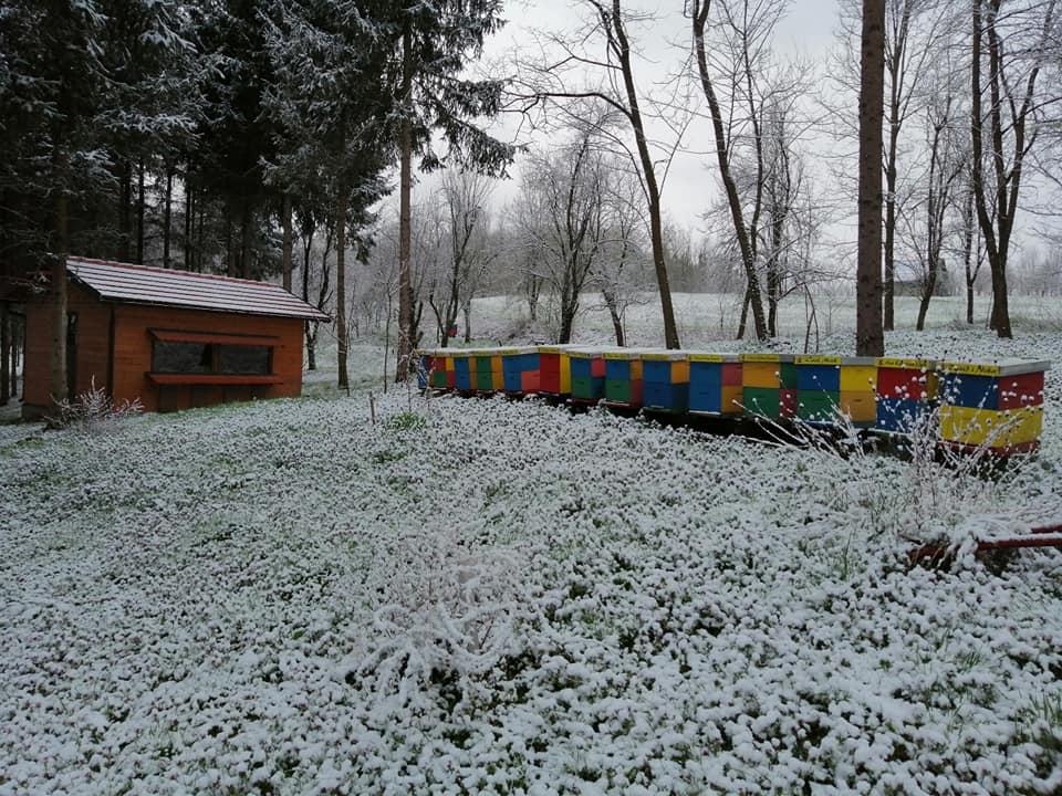 NESREĆA Poljoprivrednici na mukama, snijeg i mraz stvorili novi problem