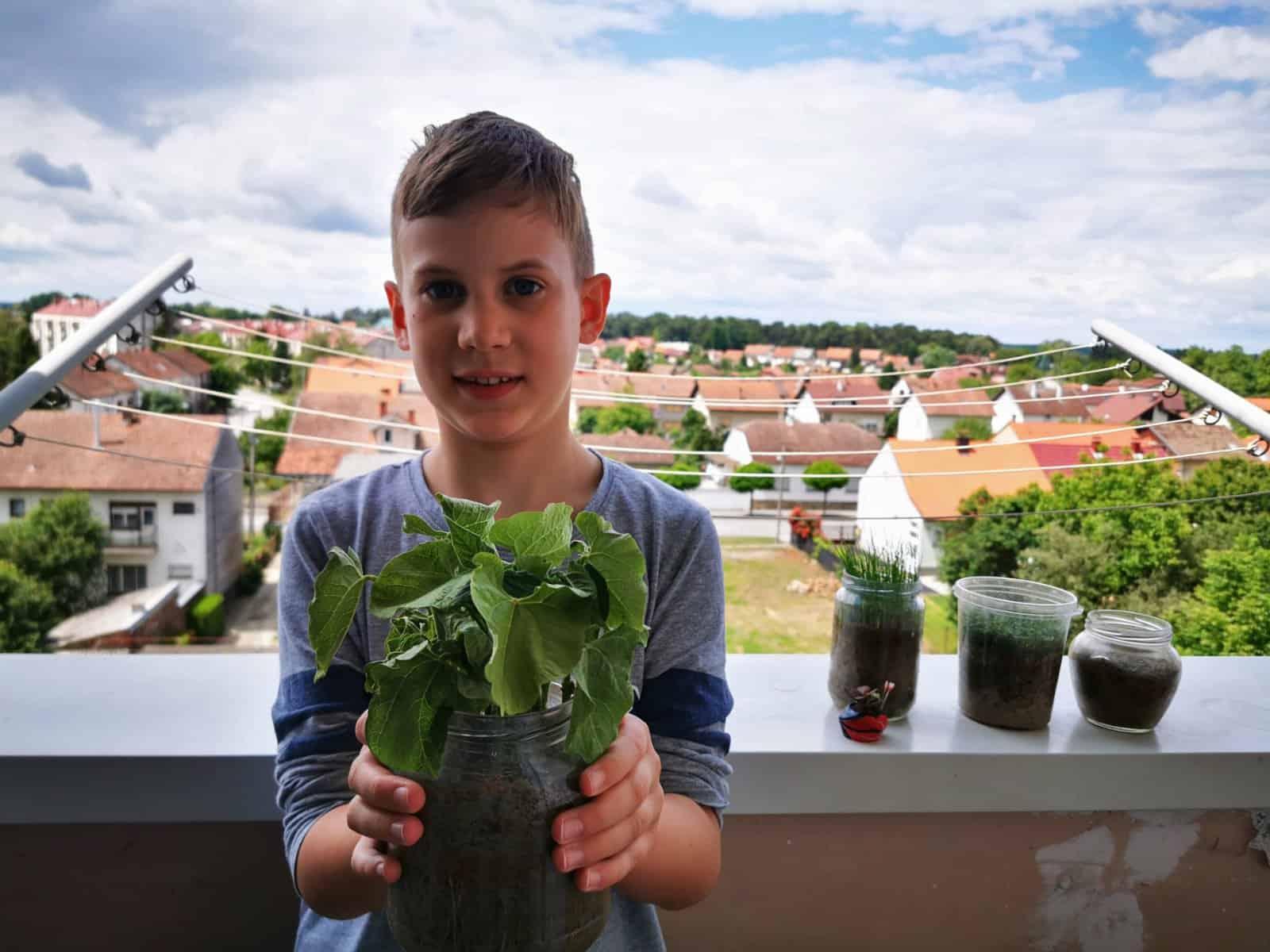 MALI ZELENI Bjelovarski školarci u izolaciji postali vrsni vrtlari