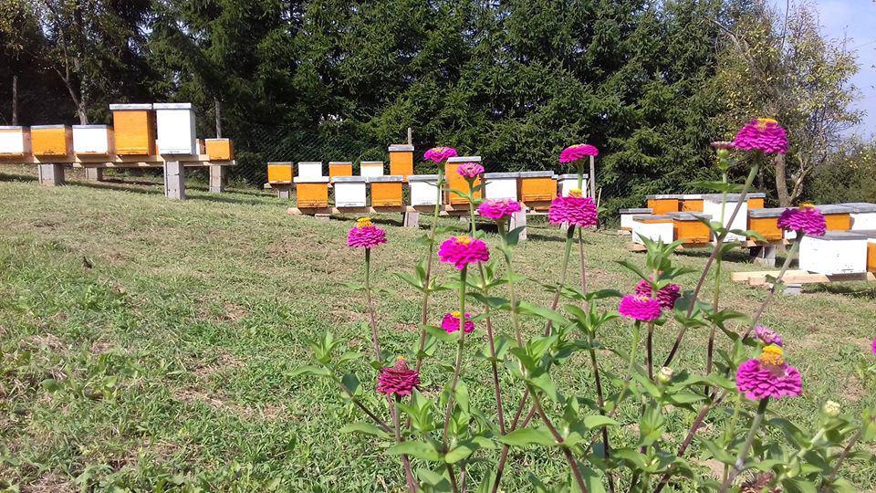 AMERIČKA GNJILOĆA Ova bolest uzrok je jada mnogih pčelara