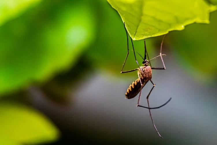 ŠTEFANJCI, OPREZ Večeras diljem općine tretiranje komaraca