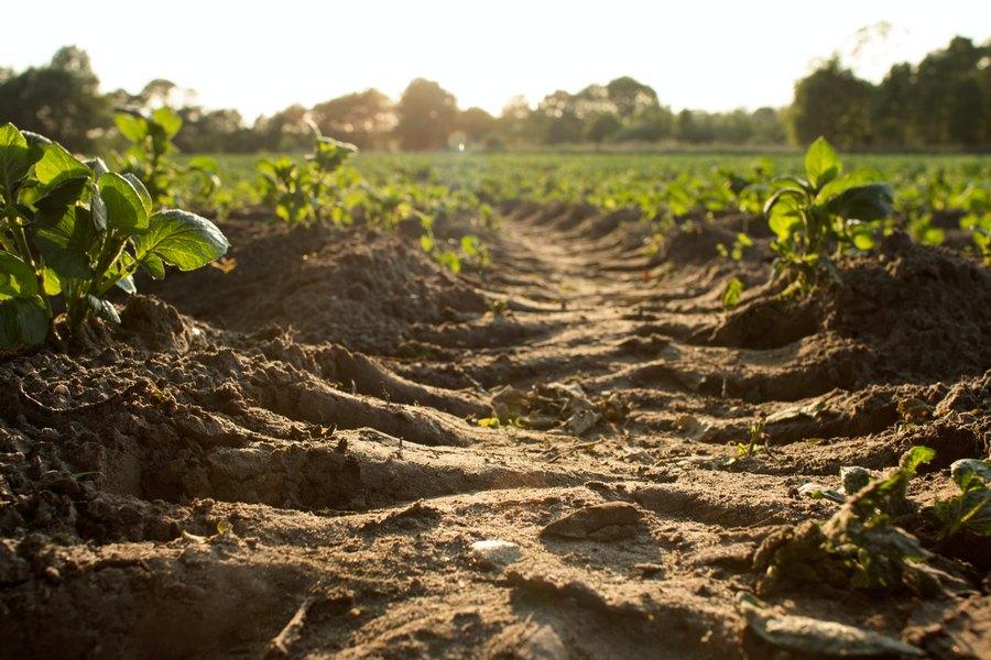 ZAPRIMANJE UZORAKA TLA Provjerite stanje poljoprivrednog zemljišta
