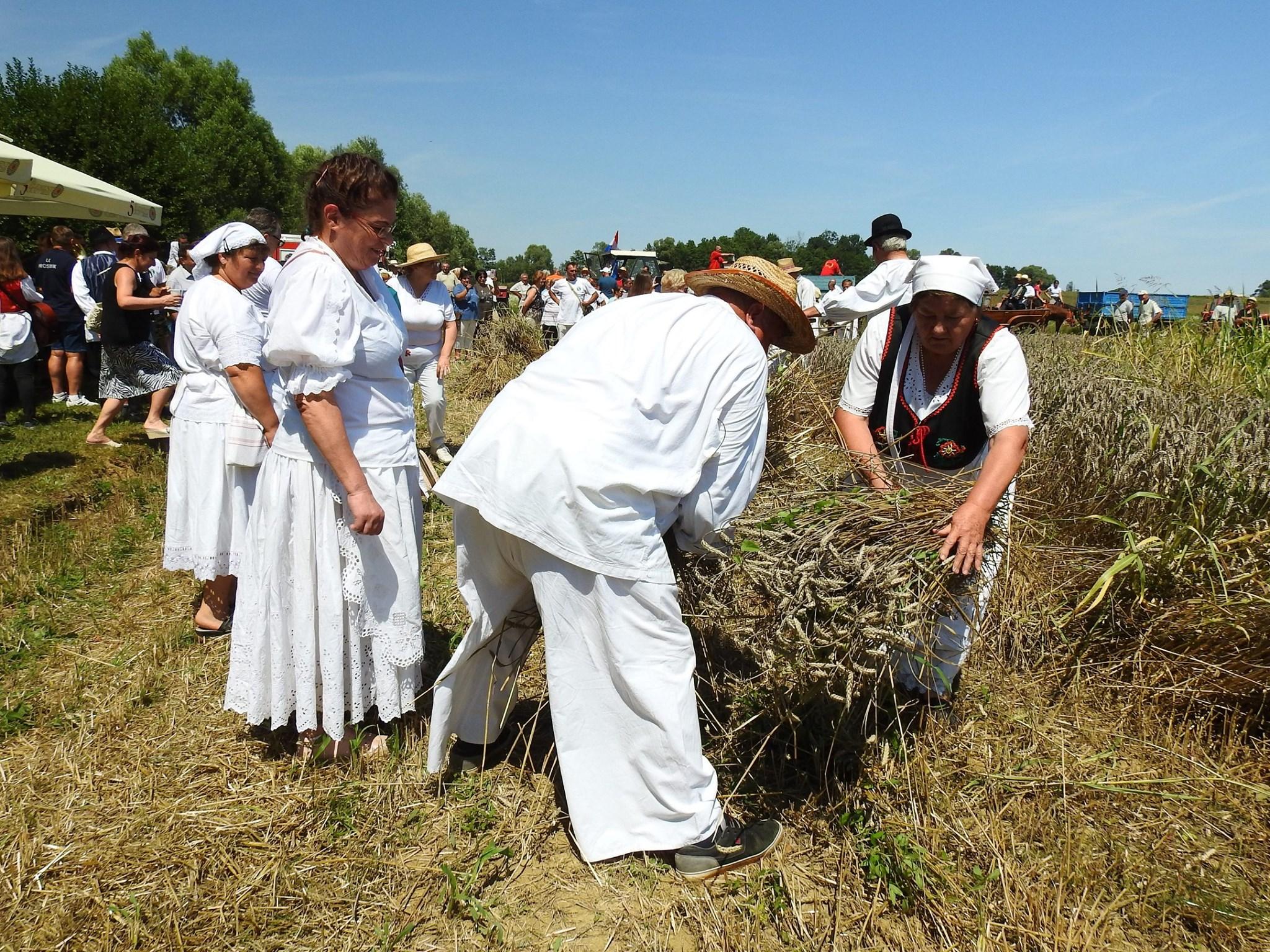 PRIKAZ ŽETVE Velikogrđevčani zaživjeli svoju tradiciju