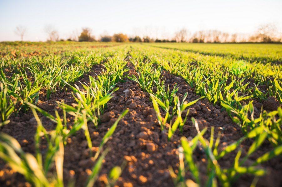 Kako do prijeko potrebnih državnih hektara?