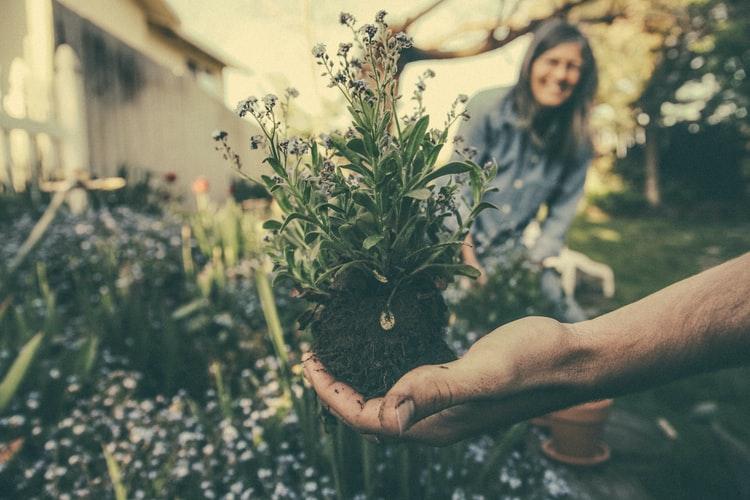 ČAZMANSKI GRUNTEK Projekt za zaljubljenike u prirodni način života