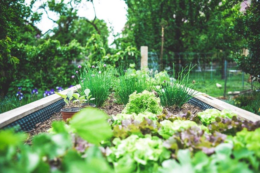 GRUNTEK U kratko vrijeme već 200 zainteresirasnih za obradu vrtova