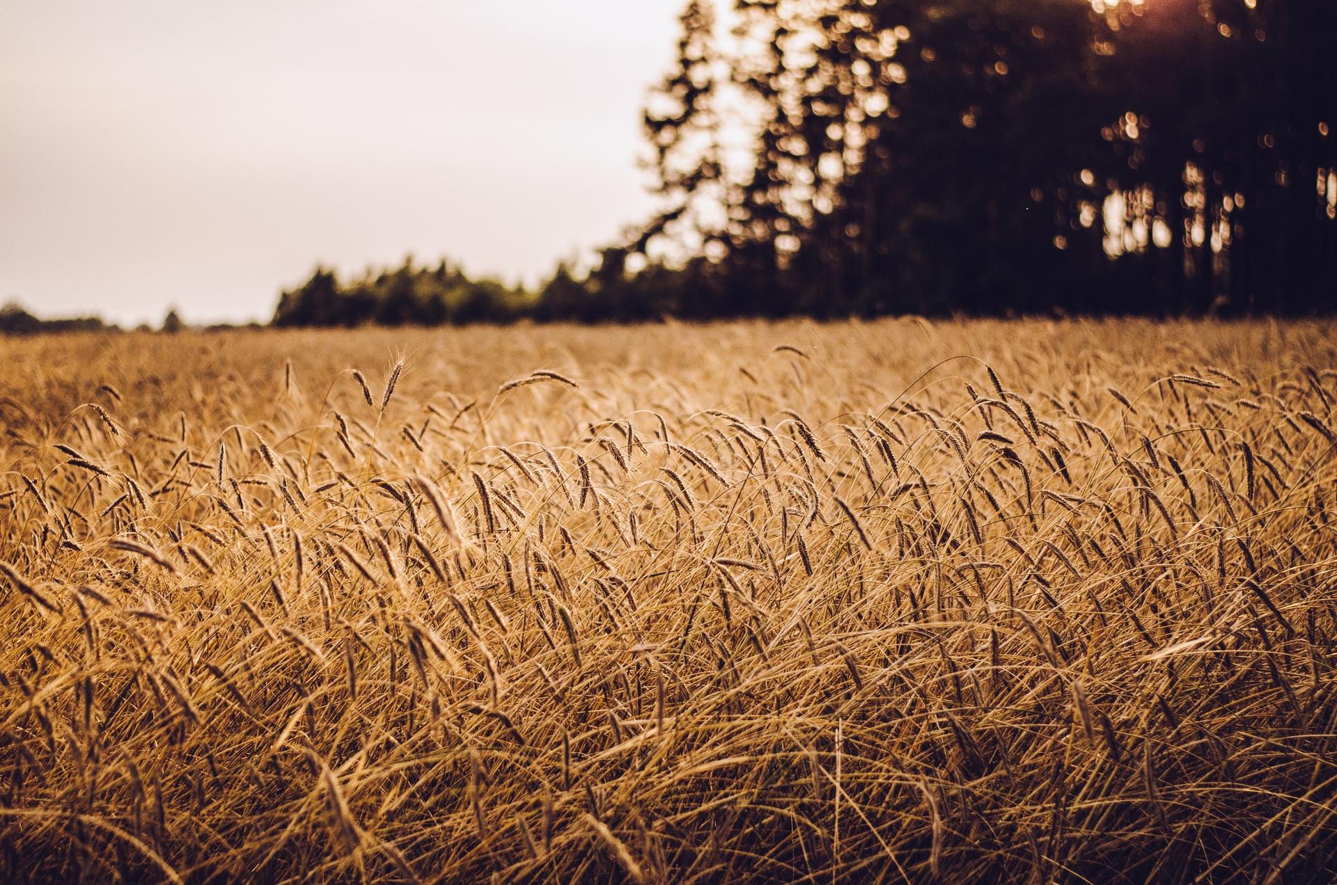 Jedino žitarice bilježe rast vrijednosti