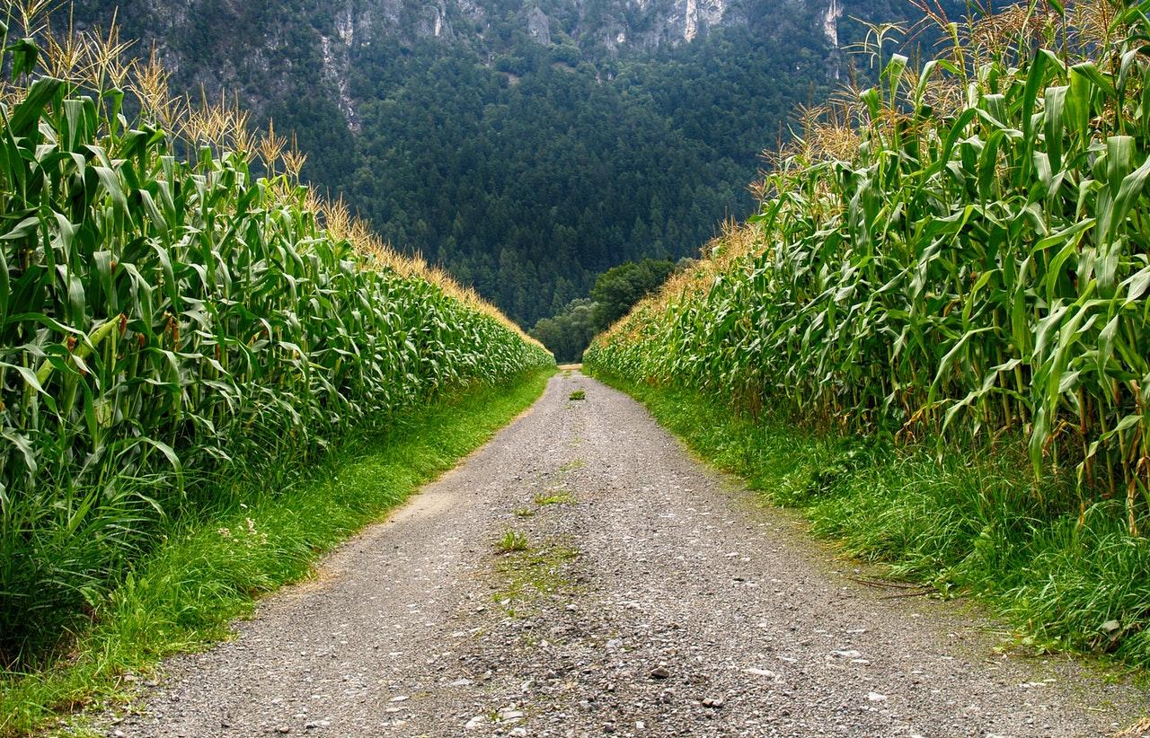 Uređuju se poljski putovi, nasipi, mostovi…