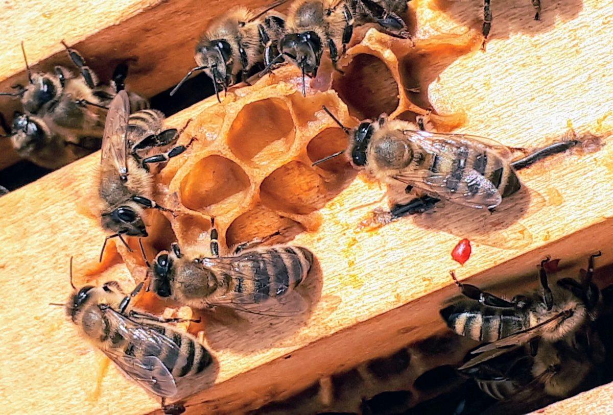 Dio pčelara je pretrpio velike gubitke