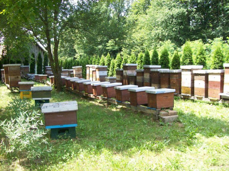 Pčelari u središnjoj Hrvatskoj ostali bez trećine zajednica