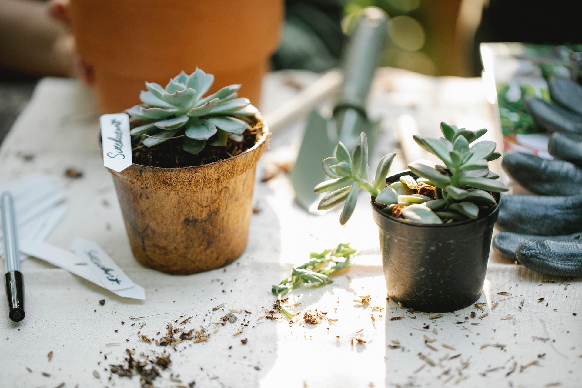 Otkrijte važnost uzgoja domaće hrane i način čuvanja sjemenja