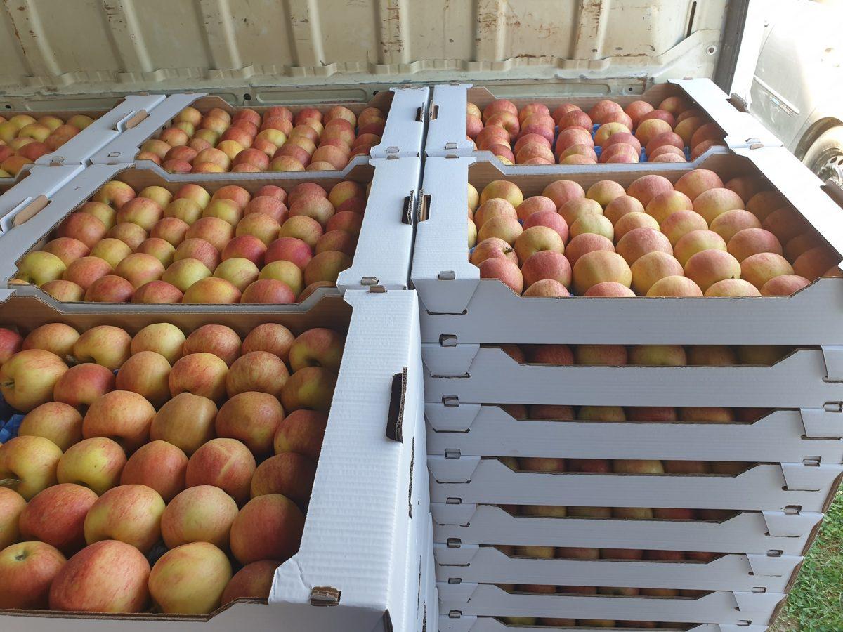 Svi su za hladnjaču za voće i povrće! Samo do izbora ili ipak...