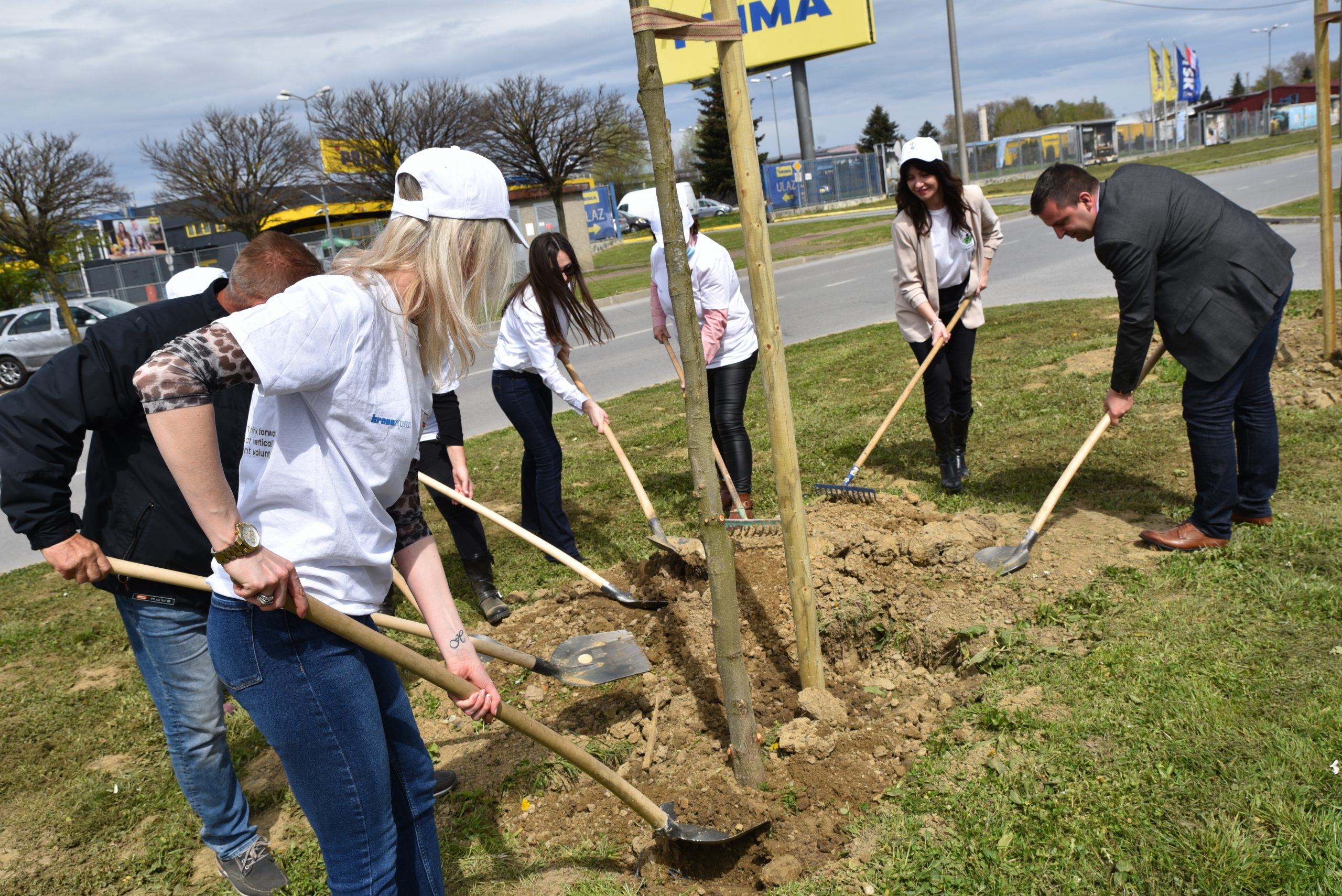 Bjelovar će zazeleniti 1180 novih stabala
