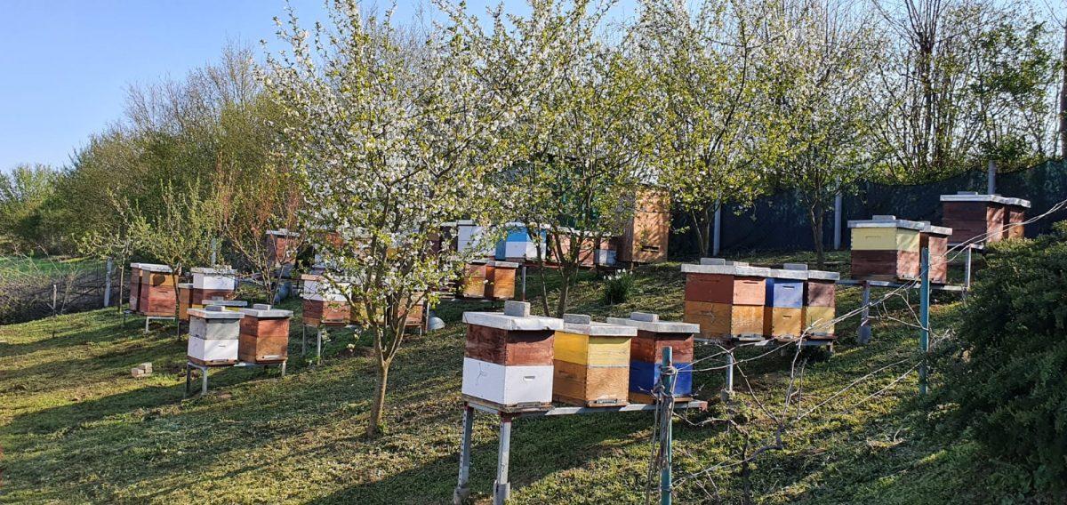 Pčelari bez paša, pčele na rubu gladi, ministarstvo najavljuje pomoć