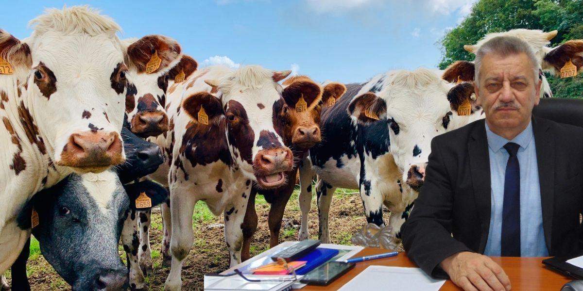 Uskrsnice dijele kravama, kozama, krmačama…