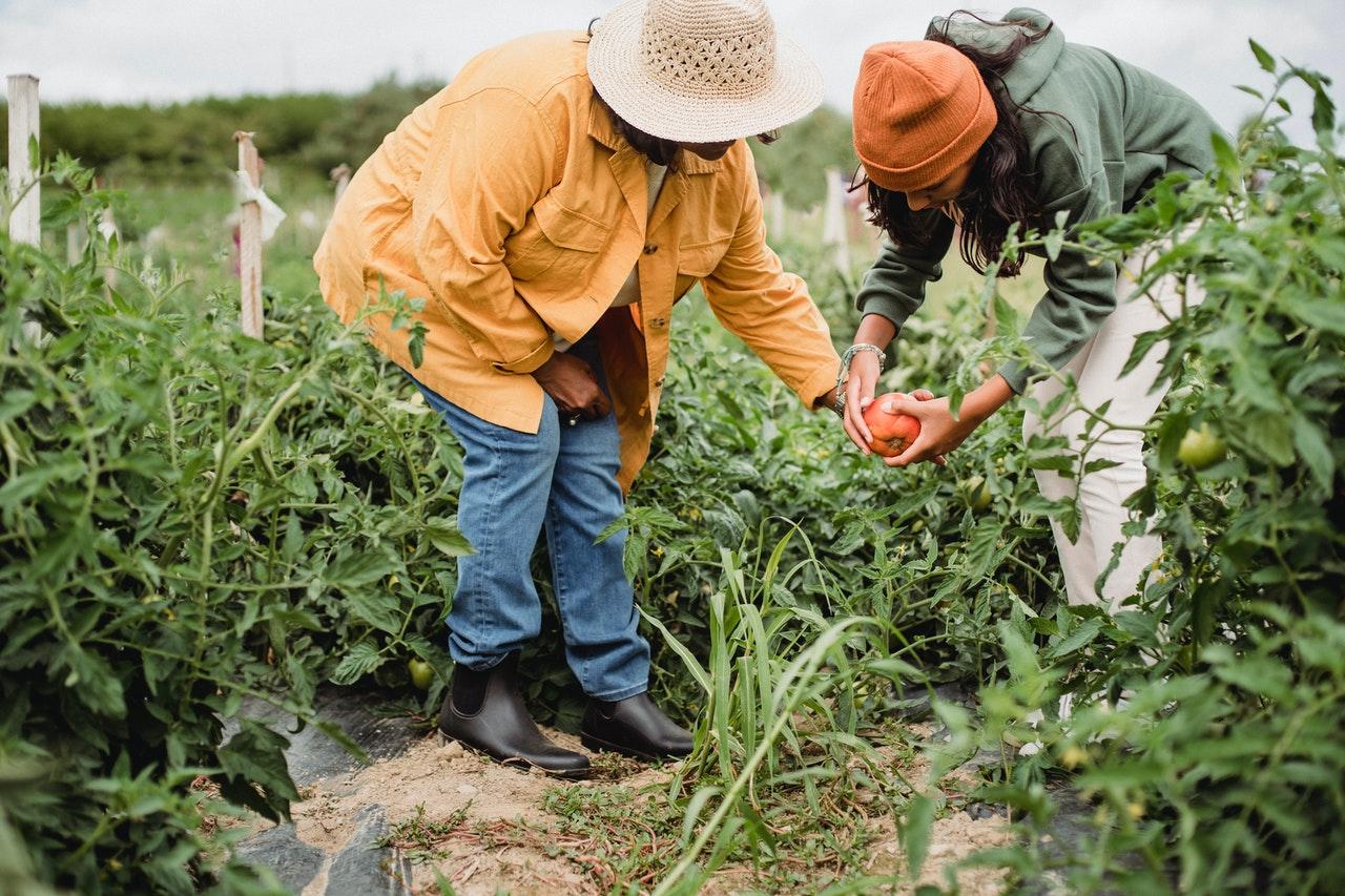 Poljoprivrednici otkrili kakve 'pogurance' očekuju od nove lokalne vlasti u iduće četiri godine