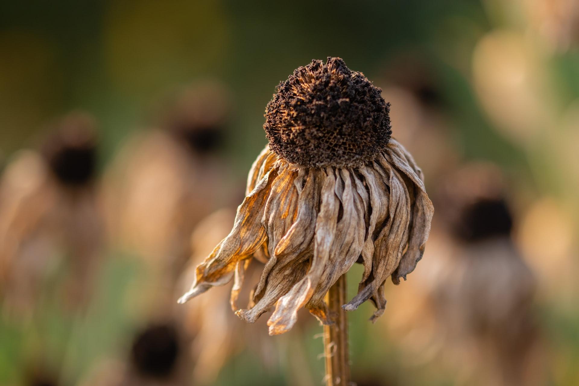 BBŽ proglasila prirodnu nepogodu suše za brojne općine i jedan grad