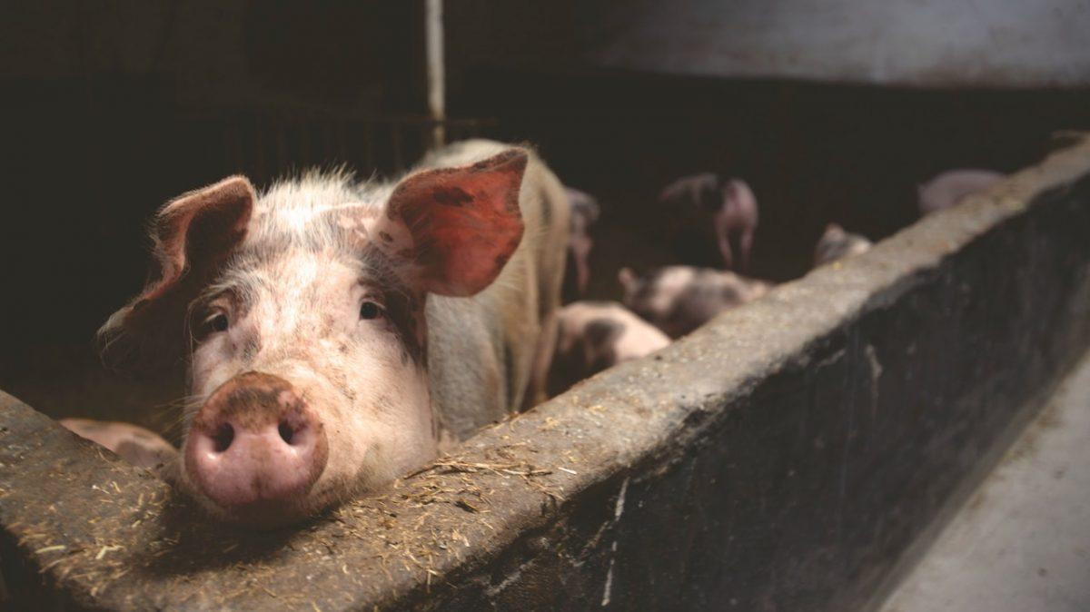 Teško stanje u stočarstvu, poljoprivrednici traže hitne mjere