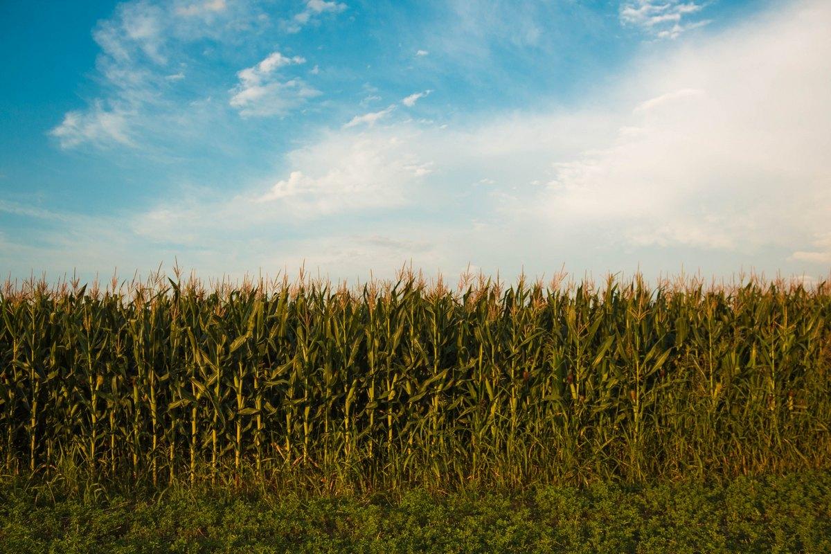 Prijavu štete podnijelo tridesetak štefanjskih poljoprivrednika