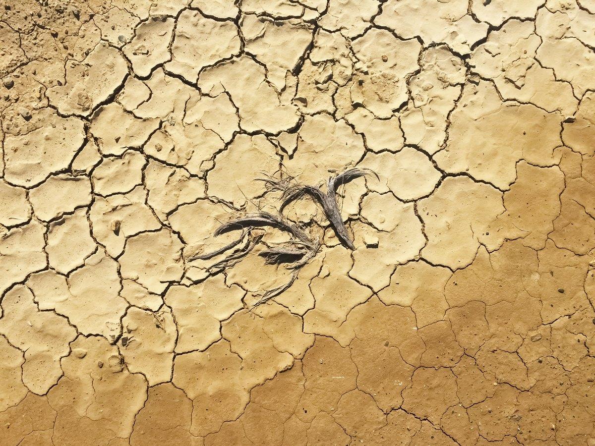 Daruvarski poljoprivrednici štetu od suše mogu prijaviti još nekoliko dana