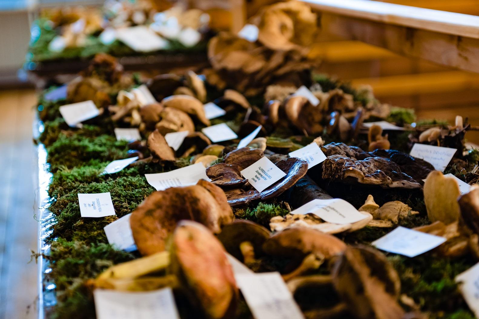 Za vikend dođite u Repušničko polje na jedinstveni FungiFest!