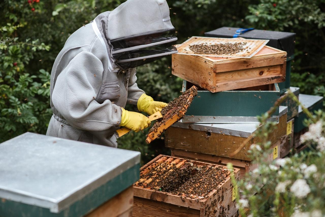 Pčelari ostali praznih košnica, u pomoć priskočila država