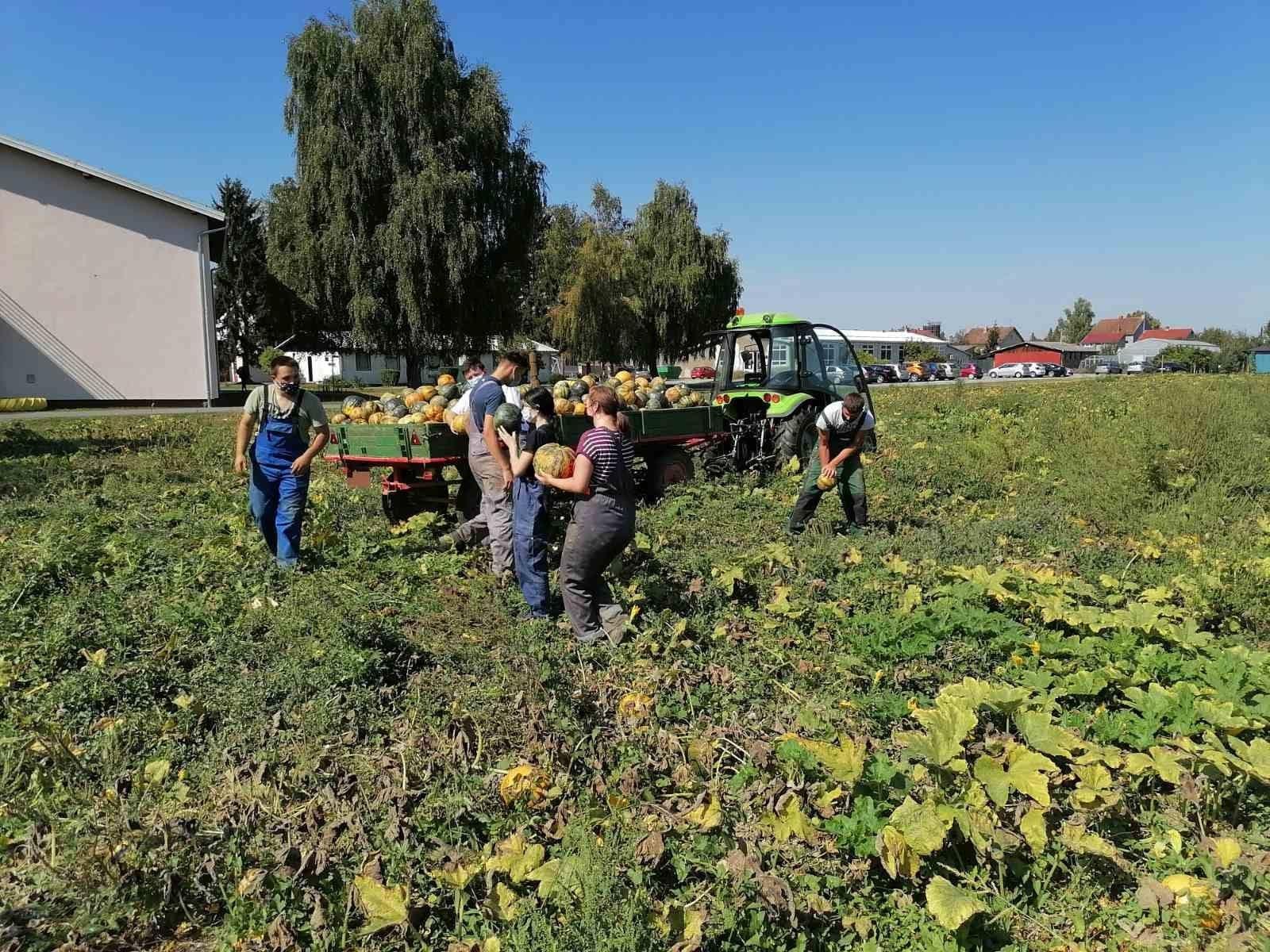 Mladi Grubišnopoljci u praksu provode krilaticu - od polja do stola